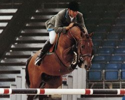jumper Lord Z (Holsteiner, 1990, from Lord 1134)