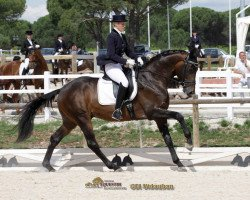 dressage horse Grand Passion (Trakehner, 2005, from Oliver Twist)