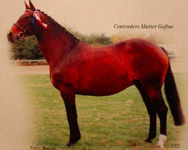 horse Gofine (Holsteiner, 1970, from Ramiro Z)