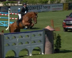 jumper E Inception (Royal Warmblood Studbook of the Netherlands (KWPN), 2009, from Indoctro)
