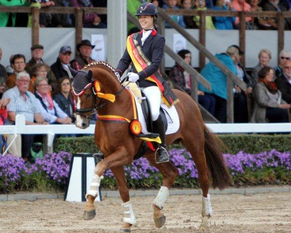 dressage horse Sir Heinrich (Oldenburg, 2008, from Sir Donnerhall I)