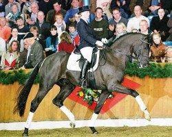 dressage horse San Amour I (Oldenburg, 2004, from Sandro Hit)
