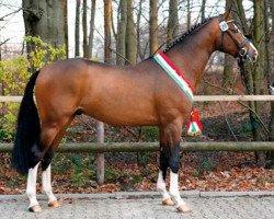 jumper Coronas (Westphalian, 2005, from Cornet Obolensky)