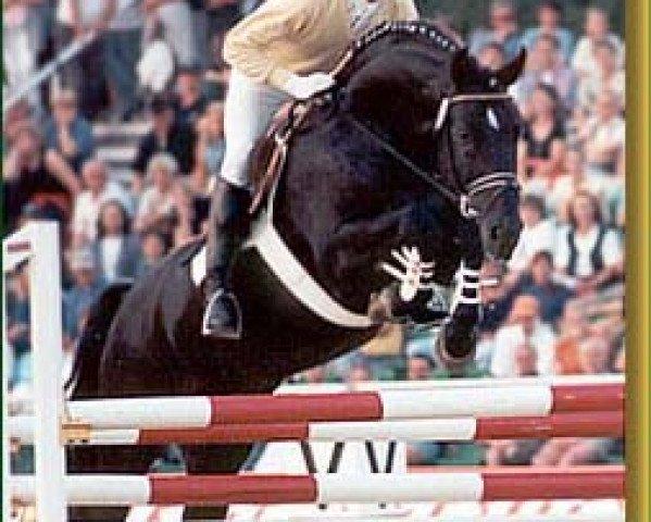 horse Graf Grannus (Hanoverian, 1988, from Grannus)