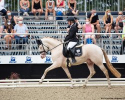 Double Cream (German Riding Pony, 2017, of Dance For Me)