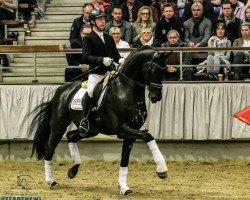 dressage horse Bernay (Rhinelander, 2011, from Boston)