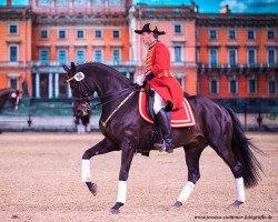 horse Silberschmied (Hanoverian, 2004, from Sunlight xx)