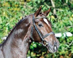 dressage horse Quantensprung (Hanoverian, 2010, from Quando-Quando)