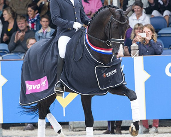 dressage horse Everdale (Royal Warmblood Studbook of the Netherlands (KWPN), 2009, from Lord Leatherdale)