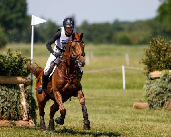 jumper Fighting Line (German Sport Horse, 2007, from Ostermond xx)