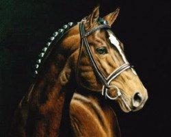 horse Feiner Stern (Hanoverian, 1983, from Freiherr)