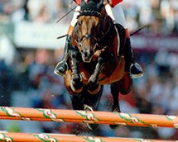 horse Libero H (Holsteiner, 1981, from Landgraf I)