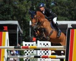jumper Araldik (German Sport Horse, 2007, from Askari)
