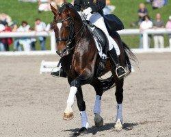 dressage horse Rivero II (Bavarian, 1993, from Rautenstein)