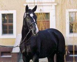 dressage horse Danzas (Oldenburg, 2001, from De Niro)