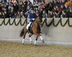 dressage horse Locksley III (Hanoverian, 2003, from Londonderry)