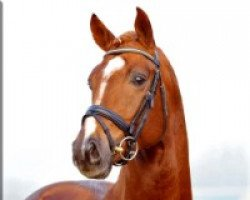 dressage horse Fiorano (Hanoverian, 2005, from Rousseau)