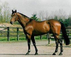 jumper Nabab de Rêve (Belgian Warmblood, 1990, from Quidam de Revel)