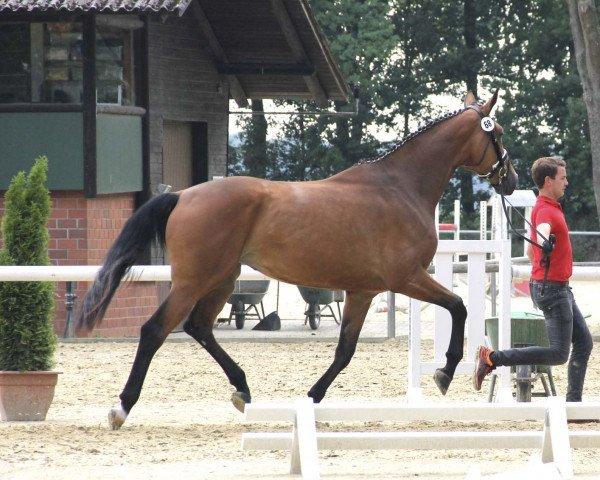 dressage horse Estelle (Westphalian, 2014, from Escolar)