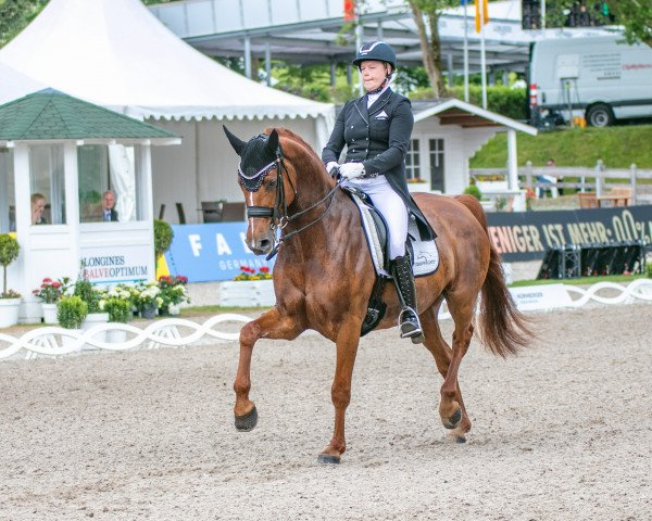 dressage horse Finley 97 (Westphalian, 2013, from First Selection)