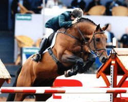 horse Obos Quality (Oldenburg, 1992, from Quick Star)