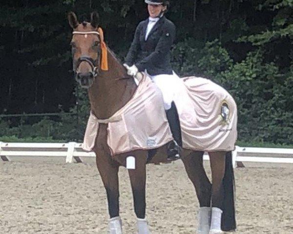 dressage horse Escalla OLD (Oldenburg, 2015, from Escolar)