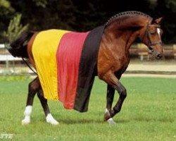 horse Argentinus (Hanoverian, 1980, from Argentan I)