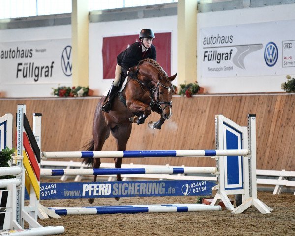jumper Hi-Ten (Royal Warmblood Studbook of the Netherlands (KWPN), 2017, from Haines)