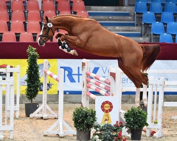 horse Oganero P (German Sport Horse, 2018, from Ogano Sitte)