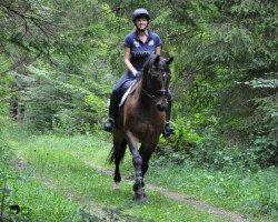 horse Chantal 314 (Westphalian, 2002, from Cordobes I)