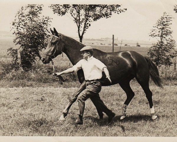horse Adlerbucht (Westphalian, 1952, from Ableger I)