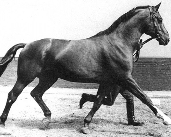 horse Absatz (Hanoverian, 1960, from Abglanz)