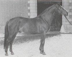 horse Abhang II (Hanoverian, 1956, from Abglanz)
