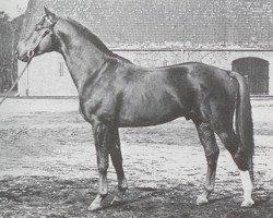 horse Abhang I (Hanoverian, 1953, from Abglanz)