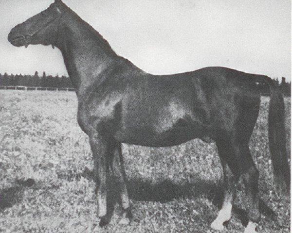 horse Hyperion (Trakehner, 1926, from Dampfross)