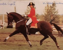 horse World Cup I (Hanoverian, 1977, from Woermann)