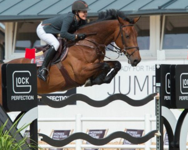 jumper Legacy (Zangersheide riding horse, 2010, from Chippendale Z)