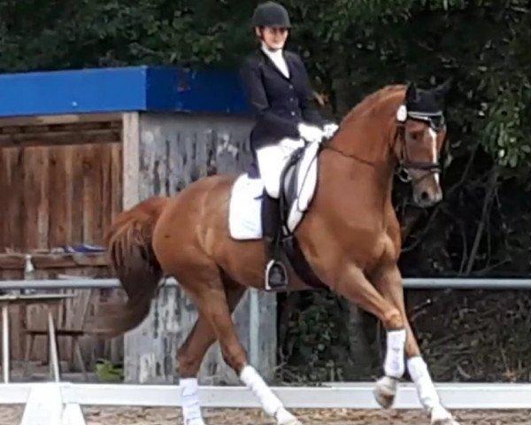dressage horse Swing my heart (Westphalian, 2012, from Sir Heinrich)