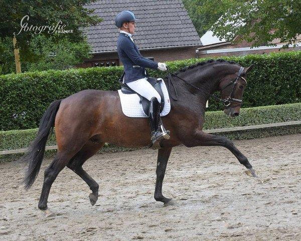 dressage horse Sammy de Luxe M (Westphalian, 2015, from Don Frederic 3)