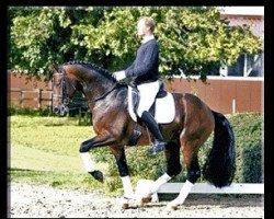 horse Scolari (Hanoverian, 2004, from Sandro Hit)