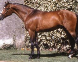 horse Quidam de Revel (Selle Français, 1982, from Jalisco B)