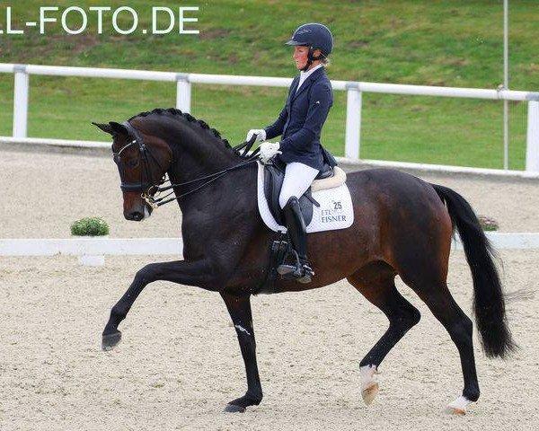 dressage horse Schöne Scarlett (Hanoverian, 2013, from Scolari)