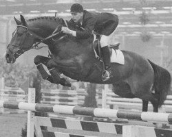 horse Nimmerdor (Royal Warmblood Studbook of the Netherlands (KWPN), 1972, from Farn)