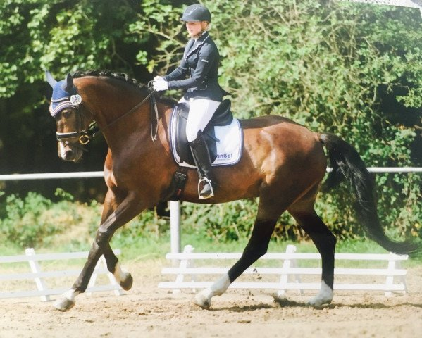 dressage horse Caruso F (Oldenburg show jumper, 2009, from Clintord I)