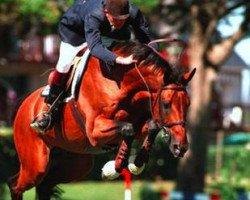 horse Quat'Sous (Selle Français, 1982, from Kayack)