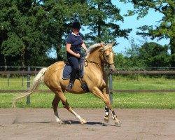dressage horse Auekrugs True Miracle (German Warmblood, 2012, from Rff The Alchemist xx)