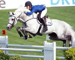 jumper Levisto Z (Holsteiner, 1997, from Leandro)