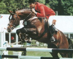horse Voltaire (Hanoverian, 1979, from Furioso II)