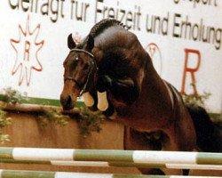 horse Larome (Holsteiner, 1984, from Landgraf I)