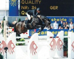 jumper Quality 9 (Holsteiner, 1999, from Quinar)